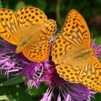 На цветочках бантики :: SELENA4950