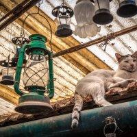 Хранитель лампы :: Oleg