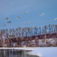 Лебединое озеро :: Елена Маковоз