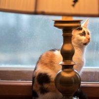 Cat :: Ilze Strēle