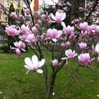 Весна :: Алексей Golovchenko
