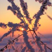 Морозный закат :: Алексей Баринов