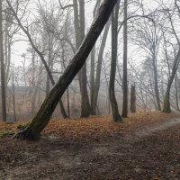 Утро туманное (2) :: Яна