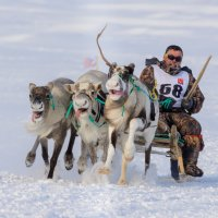 Три оленьи силы!!! :: Олег Кулябин
