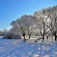 Зимний свет... :: Sergey Gordoff