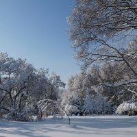 для Москвы - зима крассотка 04 :: Kriss Ампар