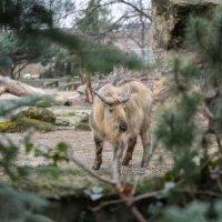 В Берлинском зоопарке :: Владимир Горубин