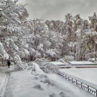 Прогулка в парке. Февраль. :: Василий Ярославцев