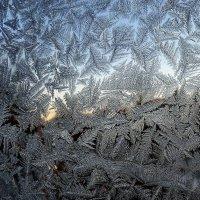 Морозные узоры :: Ирина Via