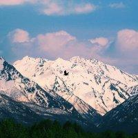 the mountain :: Олеся Дяченко