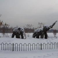 В зимнем парке... :: LORRA ***