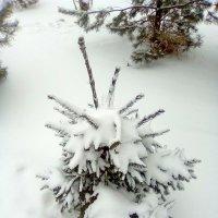 Белоснежно снежно :: Катя Бокова