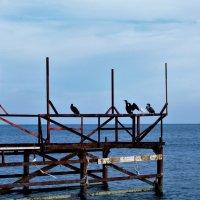 Птичьи посиделки :: Виктория Попова
