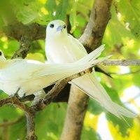 Белые сейшельские птицы :: Ольга Петруша