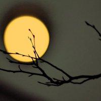 Катилась по небу луна... :: Ольга Попова (popova/j2011)