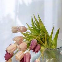 Тюльпаны в кувшине. :: Bosanat
