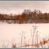 Пасмурные цвета зимы. :: Maxim Semenov