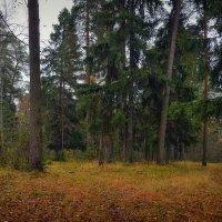 Лесная поляна :: Алексей (GraAl)