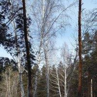 Снежный март :: nika555nika Ирина