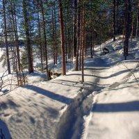 Лесными тропами :: Анжела Пасечник