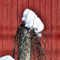 Снег тает, кругом причудливые зверюшки. :: Татьяна Помогалова