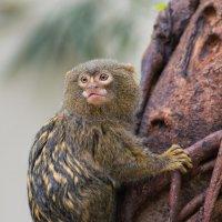Пальчиковая обезьянка :: Nata_li В.