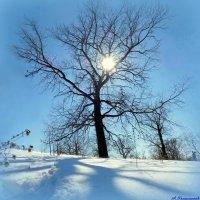 Где-то в марте.... :: Андрей Заломленков