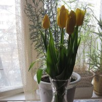 Букет тюльпанов жёлтых :: Дмитрий Никитин