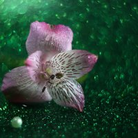 Цветочный бриз :: Nataliya Zvorigina