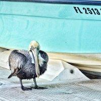 Pelicans :: Анастасия Громова