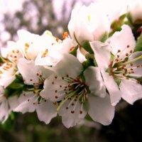 Весна...весна... :: Вячеслав Медведев