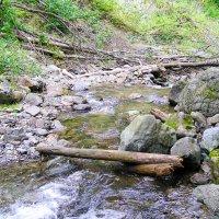 Горная речка в лесу. Архыз. КЧР. :: LionLeo66 Шпак ОВ