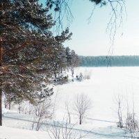 У озера :: Владимир Звягин