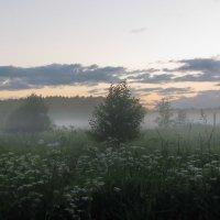 Туман над цветочными полями :: Лара Симонова
