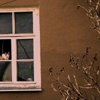 весна :: леонид логинов