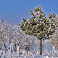 Зима в Гомеле :: Евгений Лимонтов