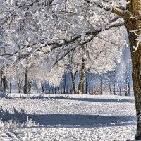 Зима в Гомеле (2) :: Евгений Лимонтов