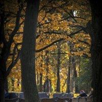 Одинокая скамейка :: Евгений Лимонтов