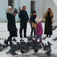 Покормим голубей :: san05 -  Александр Савицкий