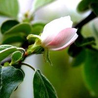 Весны прекрасные мгновения :: Алла ZALLA