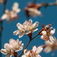 Весна :: GALINA