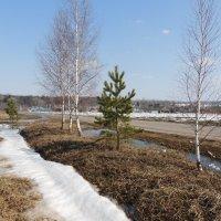 А воды уж весной шумят... :: Вячеслав Маслов