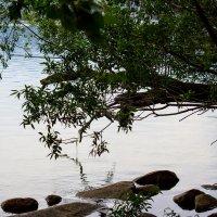 На озере :: Светлана SvetNika17