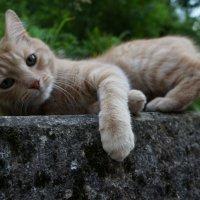 PRO  Кота ... :: Алёна Савина