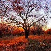 Осенний закат :: Алексей Баринов