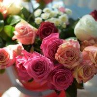 розы :: Ксения Жильникова