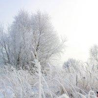 Зимние чудеса :: Виктория Невская