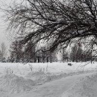 зимняя фотосессия :: Галина R...