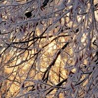Зимний закат :: Ирина Пыхачева