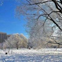 Зимнее одиночество... :: Sergey Gordoff